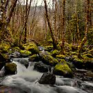 Stumbling Stones by Charles & Patricia   Harkins ~ Picture Oregon