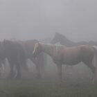 foggy horses by dc witmer