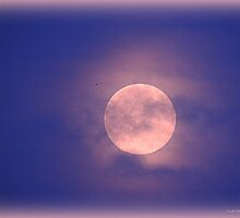 The Blue Moon of August 2013 was Pink by TrendleEllwood