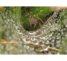 Funnel Wolf Spider & Droplets Photographic Print