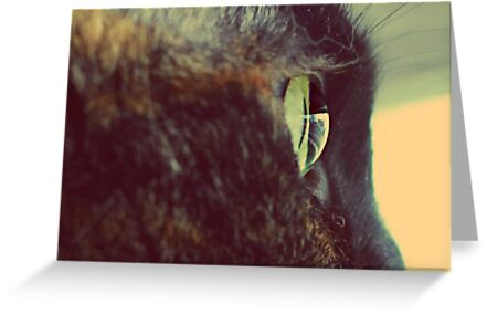 In a cat's eye, all things belong to cats... by Laura-Lise Wong