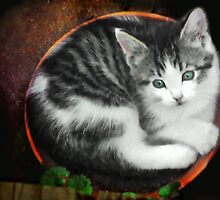 Kitten in a Flower Pot by Nadya Johnson