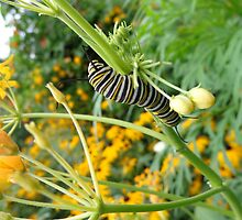 Caterpillars at Play by Brian Schell