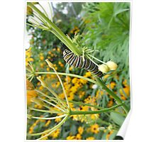 Caterpillars at Play Poster