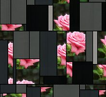 Pink Roses in Anzures 3 Art Rectangles 7 by Christopher Johnson