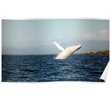 Show Off - Migaloo the white whale Poster