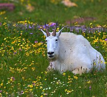 Billy among the Wild Flowers by JamesA1