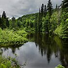 Forest Lake - Charlevoix, Quebec, Canada by Georgia Mizuleva