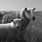 Lamb and Ewe by Lou Wilson