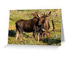 Buddies Greeting Card