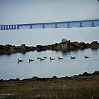 Ducks at the Tappan Zee Bridge by Yuri Lev