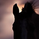Equine Sunset by jamieleigh