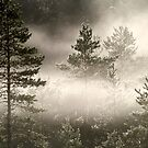 23.8.2013: Fog in the Forest by Petri Volanen