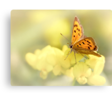Precious Summer Gold Canvas Print