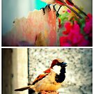 Tropical Birds by tropicalsamuelv
