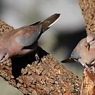 Laughing Doves by Rina Greeff
