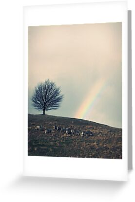Chasing rainbows and counting sheep. Same thing really. by John Medbury (LAZY J Studios)