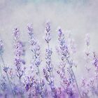 lavender romance by lucyliu