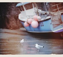 Seagulls by PeterMarchant