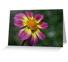 Rosy Outlook for a Dahlia Greeting Card