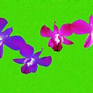 ORCHIDS by DAdeSimone
