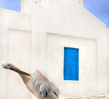 ..the local Pelican of Mykonos  {FEATURED} by John44