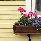 Flower Box by Caroline Fournier