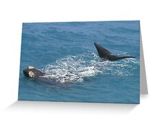 Whales at head of Bight, 2013. Greeting Card