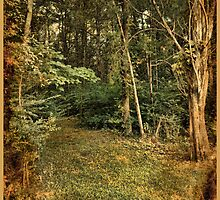 Walk in the woods by DonaldCole