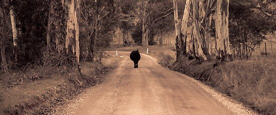 Its a cows road by Niisophotos