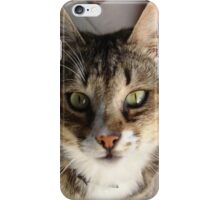 Tabby Cat Kitten Giving Eye Contact iPhone Case/Skin