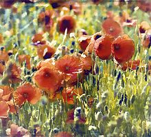 poppy dance by Teresa Pople