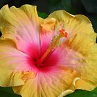Hibiscus bloom by Newstyle