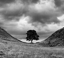Sycamore Gap by Brian Avery
