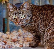 ZENA - A MORAY WILDCAT IMPOSTER by JASPERIMAGE