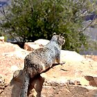 Squirrel overlooking the Grand Canyon by Elinor Barnes
