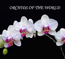 World of Orchids by Floyd Hopper