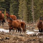 Curious Horses by JamesA1