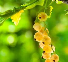 white currant on a green foliage blur by pellinni
