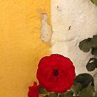 red rose by Lavanda