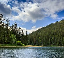 coniferous forest on the shore of a mountain lake by pellinni