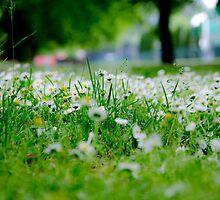 Little White Flowers by Sotiris Filippou