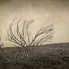 Trees last Autumn by korinneleigh
