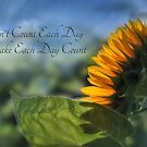 Make Each Day Count by Lori Deiter