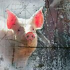 Pink Pig by Clare Colins