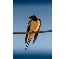 Happy Little Swallow Photographic Print