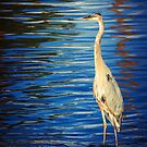Heron Staring by George Lenz