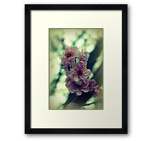 Cherry Tree Blossoms Framed Print