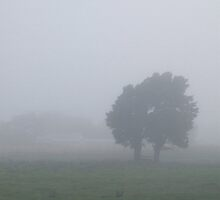 Early Morning in Ekatahuna by Kester Bradwell