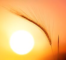 Sunset Guardian by Bob Larson